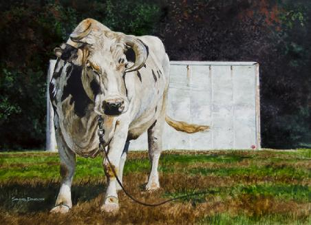 "Samuel Donovan, ""Todd's Mother Cow"" Watercolor, 18"" x 24"""